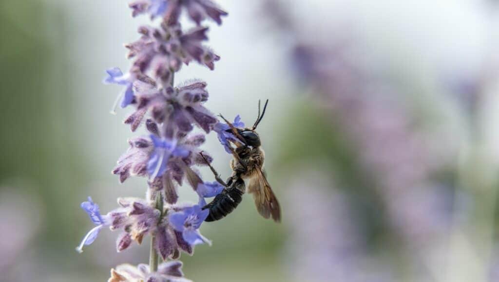 Wasp on purple flower